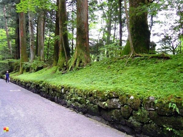東照宮へ続く並木道①