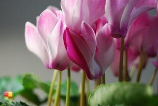 ようこそ!! 観葉植物専門サイト『日々の営み』へ