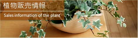 植物販売情報